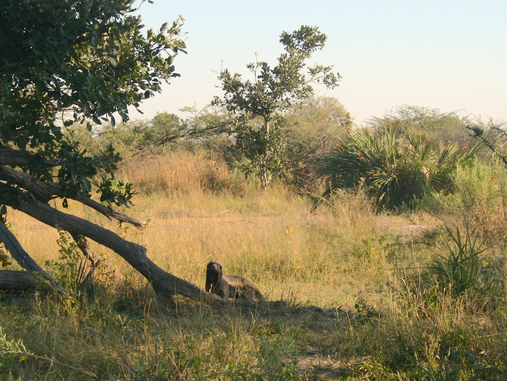 Sound recording & camping in the African wilderness – Part I